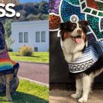 Jorongos para mascotas