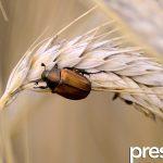 Insectos en lluvias